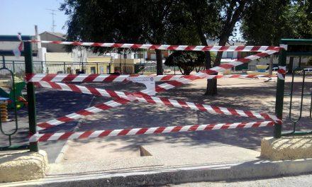 El PP presenta una moción para crear un plan específico de mantenimiento del arbolado en el municipio de Jumilla