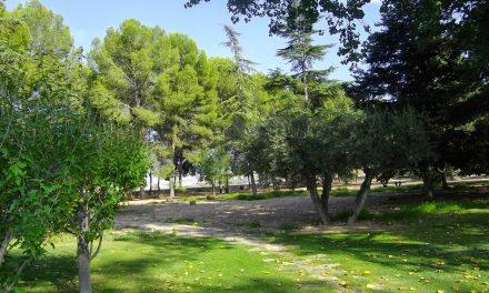 El PP de Jumilla presenta una moción sobre cesión de olivos de jardines y zonas municipales al programa de acompañamiento para la inclusión social.